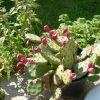 Allinger Kertészet